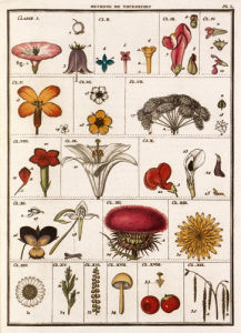 Plate I by Jean Baptiste Francois Bulliard