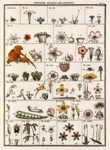 Plate II by Jean Baptiste Francois Bulliard