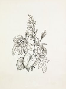 Hosta, Rhododendron, Rose by Graham Stuart Thomas