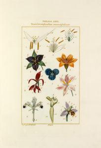 Tableau XVIII by Pierre Jean Francois Turpin