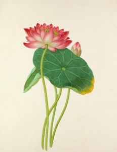 Plate 34 by Anonymous Chinese Artist