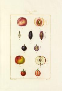 Tableau XXVIII. Fruits by Pierre Jean Francois Turpin