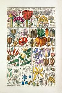 Plate 24 by Johannes Gessner