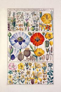 Plate 36 by Johannes Gessner