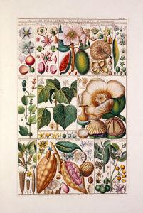 Plate 37 by Johannes Gessner