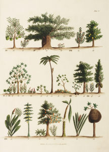 American Plants by William Jowett Titford