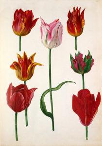 Plate 40 by Pieter van Kouwenhoorn