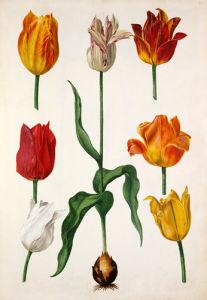 Plate 41 by Pieter van Kouwenhoorn