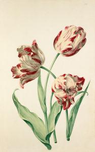 Plate 12 by August Wilhelm Sievert