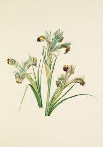Plate 17 by August Wilhelm Sievert