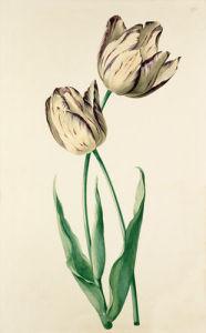 Plate 22 by August Wilhelm Sievert