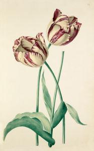 Plate 24 by August Wilhelm Sievert