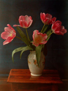 Five Pink Tulips in a Vase by William van Sommer
