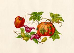 Cucurbita moschata, Ziziphus jujuba, Trapa bicornis, Cyphomandra crassicaulis by Wang Lui Chi