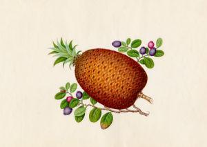 Ananas comosus, Vaccinium myrtillus by Wang Lui Chi