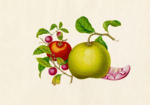 Citrus maxima, Diospyros kaki, Litchi chinensis by Wang Lui Chi