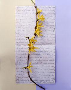 Forsythia by Deborah Schenck