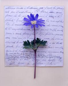 Wind Flower by Deborah Schenck