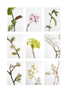 9 Flowering Trees by Deborah Schenck