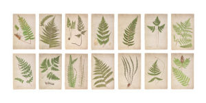 Fern Panel 2 by Deborah Schenck