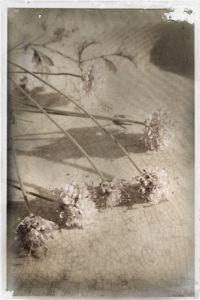 Fleurs Eparses by Deborah Schenck