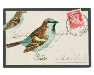 Sparrow by Deborah Schenck
