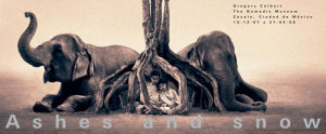 Treehouse by Gregory Colbert