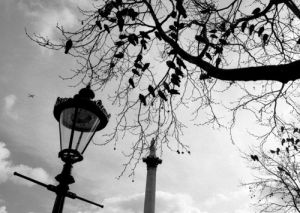 Birds waiting, Trafalgar Square by Niki Gorick