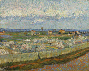 Peach blossom in the Crau by Vincent Van Gogh