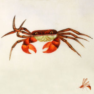 Crab by Deborah Schenck