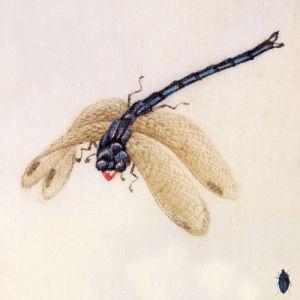 Dragonfly by Deborah Schenck