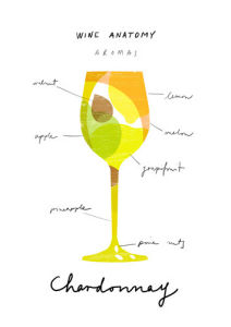 Wine Anatomy: Chardonnay by Ana Zaja Petrak