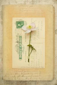 Wilde by Deborah Schenck