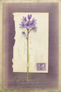 Kipling by Deborah Schenck