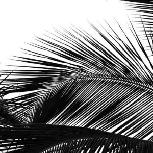 Palms 13 (detail) by Jamie Kingham