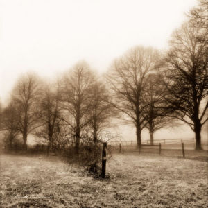 Fence Row and Trees by Harold Silverman