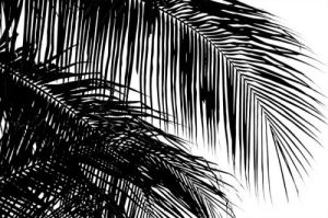 Palms 3 by Jamie Kingham