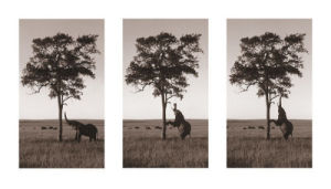 Kichwa Tembo, Masai Mara by Erin Clark