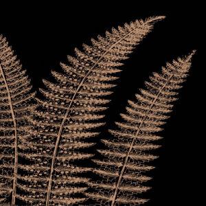 Fern II (on black) by Botanical Series