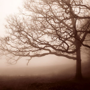Silence by Erin Clark