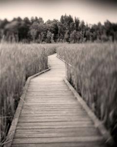 Towards Woods by Andrew Ren