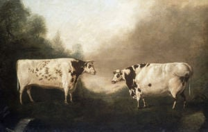 St John and Gaudy, Prize Shorthorn Cattle, property of Mr C.Mason by Thomas Fairbairn Wilson