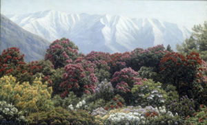 Rhododendrons in Snowy Highlands by Henrik Gamst Jespersen
