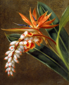A Bird of Paradise, 1835 by Johan Laurents Jensen