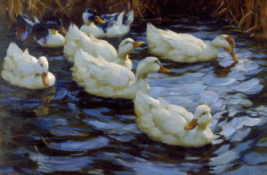 Seven Ducks in the Morning Sun by Alexander Max Koester