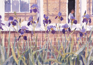 Irises by Lucy Willis