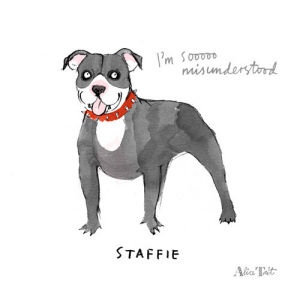 Grey Staffie by Alice Tait