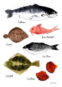 Fish Chart by Alice Tait