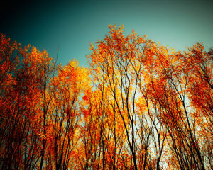 Autumn Fire by Robert Cadloff