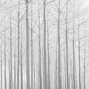 Companions III by Doug Chinnery